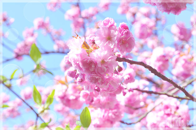 Cherry Blossoms & 50 facts about me