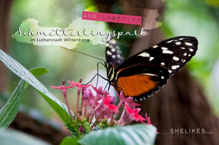 [AUSFLUGSTIPP] Alaris Schmetterlingspark in Lutherstadt Wittenberg