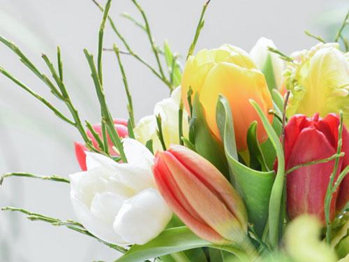 [Mini Guide] So bleiben Tulpen länger schön.